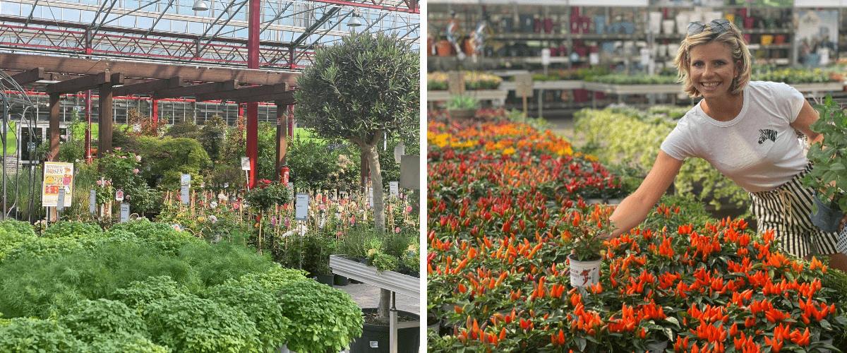 Blog 7 - Dinger's Gartencenter